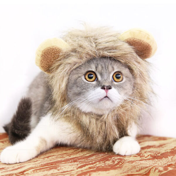 604414905925 600x600 - Funny Pet Hat For Small Dogs Cats Hat Emulation Lion Hair Mane Ears Head Cap Scarf Pet Halloween Festival Costume